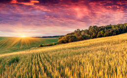 Colorful summer landscape Royalty Free Stock Photography