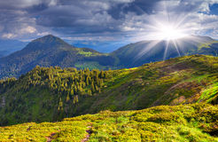 Colorful summer landscape. In the mountains Stock Images
