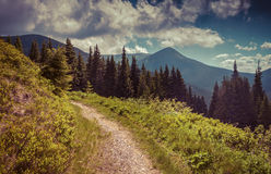 Colorful summer landscape in the mountains Stock Photos