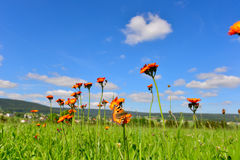 Colorful summer meadow mountains Stock Images