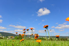 Colorful summer meadow mountains Royalty Free Stock Photography
