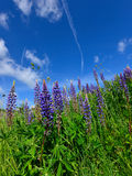 Colorful summer meadow mountains Royalty Free Stock Images