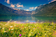 Colorful summer morning on the Bohinj lake in Triglav national p Royalty Free Stock Image