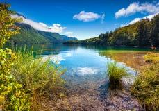 Colorful summer morning on the Bohinj lake Royalty Free Stock Image