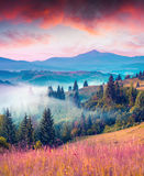 Colorful summer morning in the Carpathian mountains Stock Image