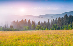 Colorful summer morning in the foggy Carpathian mountains. Royalty Free Stock Images