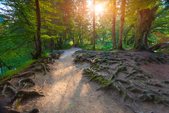 Colorful summer morning in the forest in the Plitvice National P Stock Photo