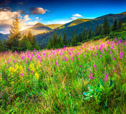 Colorful summer morning in mountains Royalty Free Stock Photography