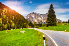 Colorful summer morning in the Switzerland Alps. View from Maloja pass Stock Images