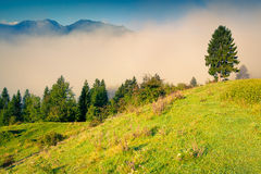 Colorful summer morning in the Triglav national park Slovenia, A Stock Image