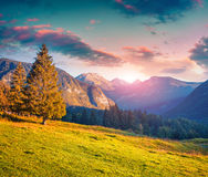 Colorful summer morning in the Triglav national park Royalty Free Stock Images