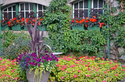 Colorful summer patio garden Stock Image
