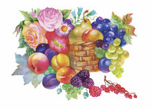 Colorful summer ripe fruits basket watercolor illustration.  Stock Photos