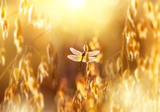 Dragonfly in the sun Stock Images