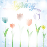 Colorful summer spring background banner with tulip flowers Stock Image