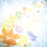 Colorful summer spring background with flowers Stock Images