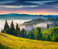 Colorful summer sunrise in Carpathian mountains. Stock Photos