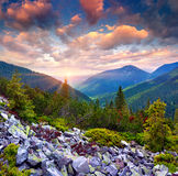 Colorful summer sunrise in the Carpathian mountains Royalty Free Stock Images