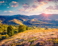 Colorful summer sunrise in the Carpathian mountains Royalty Free Stock Photography