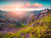 Colorful summer sunrise in the Carpathian mountains Royalty Free Stock Image