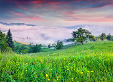 Colorful summer sunrise in foggy mountains Royalty Free Stock Images