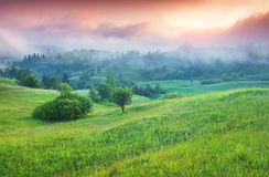 Colorful summer sunrise in the foggy mountains Royalty Free Stock Photo