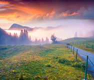 Colorful summer sunrise in the foggy mountains. Stock Image