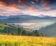 Colorful summer sunrise in mountains Royalty Free Stock Images