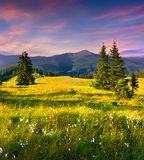 Colorful summer sunrise in mountains with a feather grass Royalty Free Stock Photography