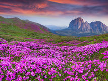 Colorful summer sunrise in the  mountains Stock Images