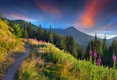 Colorful summer sunrise in mountains with pink flowers. Royalty Free Stock Images