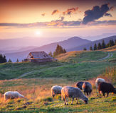 Colorful summer sunset in carpathian mountains Royalty Free Stock Photo