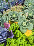 Colorful summer vegetable garden Royalty Free Stock Photos