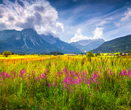 Colorful summer view of blossom valley Royalty Free Stock Image