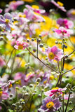 Colorful Summerflowers Royalty Free Stock Images