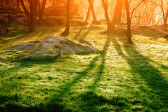 Colorful sunbeams in the forest Royalty Free Stock Photo