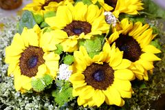 Colorful sunflowers, adobe rgb Stock Photography