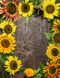Colorful sunflowers frame on rustic wooden background, top view Royalty Free Stock Photo