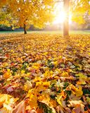 Colorful sunlighted autumn park Royalty Free Stock Photos