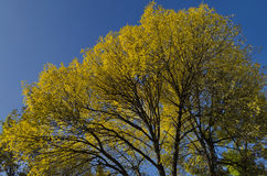 Colorful sunlit trees with autumnal leaves Stock Photography