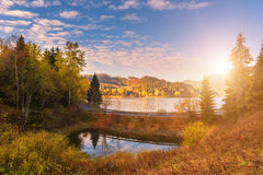 Colorful sunny autumn landscape with golden colored trees Royalty Free Stock Images