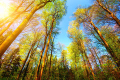 Colorful and sunny forest scenery Stock Photos