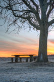 Colorful sunrise by bench and tree Stock Images