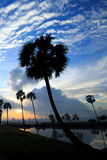 Colorful sunrise landscape with silhouettes of palm trees. Stock Photography