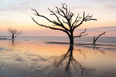 Colorful sunrise and live oaks reflected on the beach at Botany Bay on Edisto Island near Charleston, SC. Stock Photos