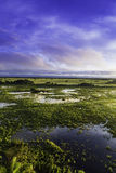 Colorful Sunrise in Pantanal River - Pantanal is the world's largest tropical wetland areas located in Brazil , South America Royalty Free Stock Photography