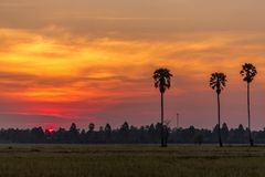 Colorful sunrise in the rice field with Sugar palm tree. Royalty Free Stock Photo