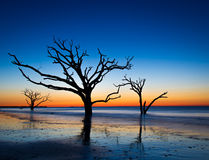 Colorful sunrise. Very colorful sunrise at Botany Bay Beach Boneyard  on Edisto Island, South Carolina Stock Photography