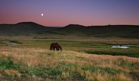 Colorful sunset. Evening scenery with grazing horses and moon Stock Photos