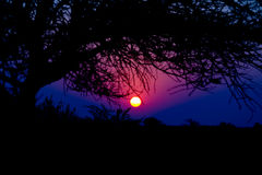 Colorful sunset in the african bush. Royalty Free Stock Photos
